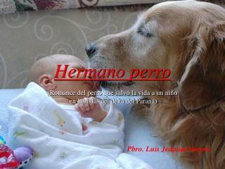 Hermano perro  Romance del perro que salv  la vida a un ni o  en las islas del delta del Paran