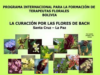 PROGRAMA INTERNACIONAL PARA LA FORMACI N DE  TERAPEUTAS FLORALES  BOLIVIA  LA CURACI N POR LAS FLORES DE BACH Santa Cruz