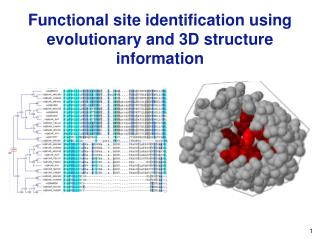 Functional site identification using evolutionary and 3D structure information