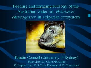 Feeding and foraging ecology of the Australian water rat, Hydromys chrysogaster, in a riparian ecosystem