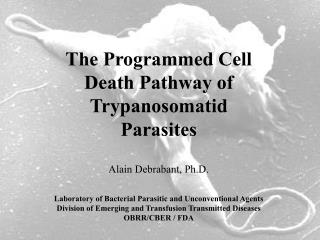 The Programmed Cell Death Pathway of Trypanosomatid  Parasites