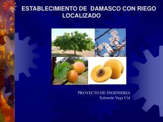 ESTABLECIMIENTO DE  DAMASCO CON RIEGO LOCALIZADO