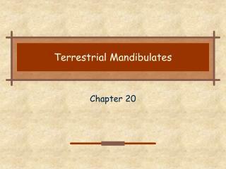 Terrestrial Mandibulates