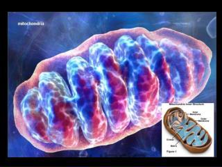 RC: Proceso metab lico que tiene como objetivo generar E ATP a partir de metabolitos primarios mol culas combustibles.