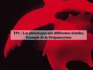 TP1 : Les ph notypes aux diff rentes  chelles, Exemple de la Dr panocytose