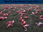 Bird Flu Hits Florida Trailer Park