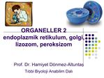 ORGANELLER 2 endoplazmik retikulum, golgi, lizozom, peroksizom