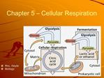 Chapter 5   Cellular Respiration