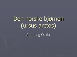 Den norske bj rnen ursus arctos