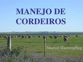 MANEJO DE CORDEIROS
