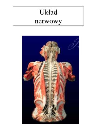 Uklad  nerwowy