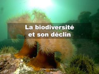 La biodiversit   et son d clin