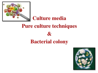 Bacterial motility