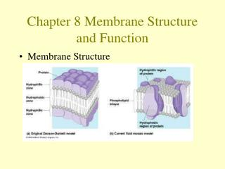 Chapter 8 Membrane Structure and Function