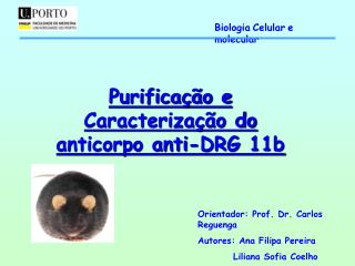 Purifica  o e Caracteriza  o do anticorpo anti-DRG 11b