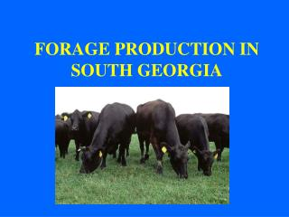 FORAGE PRODUCTION IN SOUTH GEORGIA