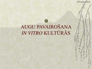 AUGU PAVAIRO ANA  IN VITRO KULTURAS