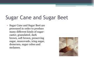 Sugar Cane and Sugar Beet