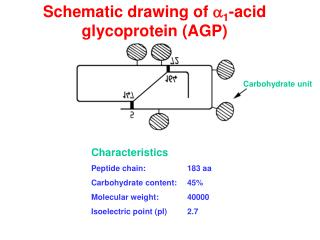 Schematic drawing of a1-acid glycoprotein AGP