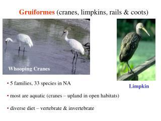 Gruiformes cranes, limpkins, rails  coots