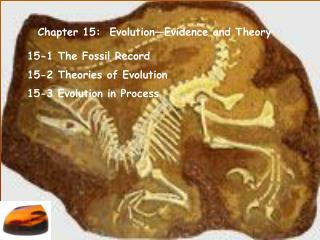 Chapter 15:  Evolution Evidence and Theory
