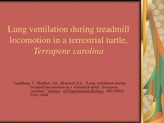Lung ventilation during treadmill locomotion in a terrestrial turtle