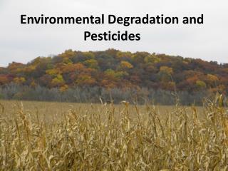 Environmental Degradation and Pesticides