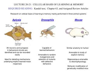 LECTURE 20-21:  CELLULAR BASIS OF LEARNING  MEMORY