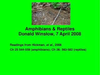 Amphibians  Reptiles Donald Winslow, 7 April 2008   Readings from Hickman, et al., 2008 Ch 25 544-559 amphibians; Ch 26: