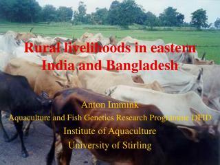 Rural livelihoods in eastern India and Bangladesh