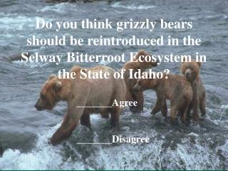 Do you think grizzly bears should be reintroduced in the Selway Bitterroot Ecosystem in the State of Idaho