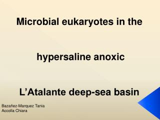 Microbial eukaryotes in the    hypersaline anoxic   L Atalante deep-sea basin
