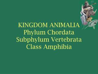 KINGDOM ANIMALIA Phylum Chordata Subphylum Vertebrata Class Amphibia