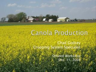Canola Production