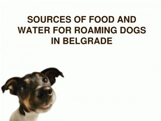 SOURCES OF FOOD AND WATER FOR ROAMING DOGS IN BELGRADE