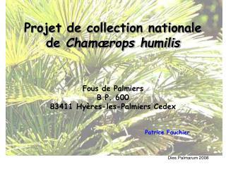 Projet de collection nationale de Cham rops humilis