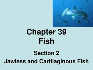 Chapter 39 Fish