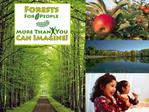 Forests For People More Than You Can Imagine