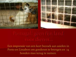 Portugal: geen fijn land  voor dieren