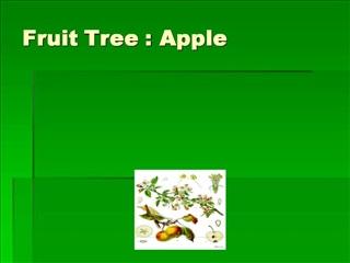 Fruit Tree : Apple