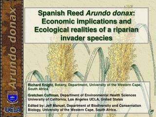 Spanish Reed Arundo donax: Economic implications and Ecological realities of a riparian invader species