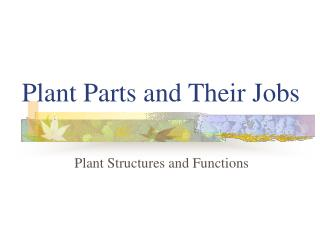 Plant Parts and Their Jobs