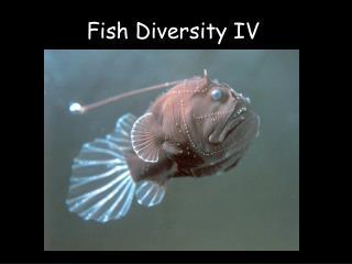 Fish Diversity IV