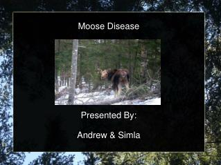 Moose Disease         Presented By:  Andrew  Simla
