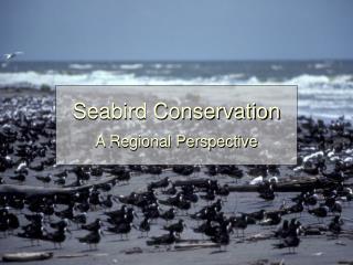 Seabird Conservation