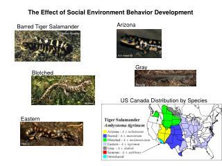 The Effect of Social Environment Behavior Development