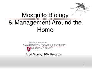 Mosquito Biology  Management Around the Home