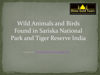 Wild Animals and Birds Found in Sariska Wildlife Sanctuary