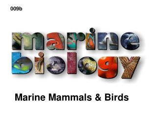 Marine Mammals  Birds