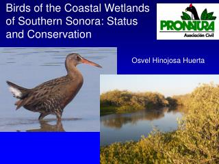 Birds of the Coastal Wetlands of Southern Sonora: Status and Conservation